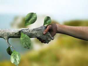 nature and man join hands